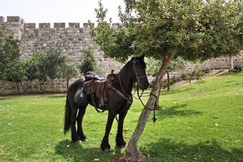 Пасха в Иерусалиме 2010. Шествие
