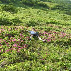 Ослик в цветах (рододенрумы)